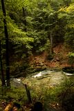Stream. Rapid mountain brook in the woods Stock Photography