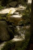 Stream. Rapid mountain brook in the woods Royalty Free Stock Photo