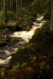 Stream. Rapid mountain brook in the woods Royalty Free Stock Photography