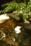 Stream. Rapid mountain brook in the woods Stock Photo