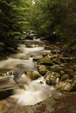 Stream. Rapid mountain brook in the woods Stock Photos