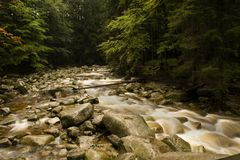 Stream. Rapid mountain brook in the woods Stock Images