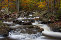 Stream at Ricketts Glen State Park PA Stock Images