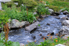 Stream in the Rila Mountains Stock Image