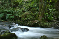 Stream river. In forest Royalty Free Stock Photo