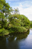 Stream river around green trees and cane. ripple water Stock Images