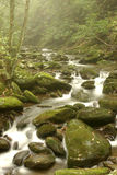Stream by the Road. Stream by Roaring Forks Nature Trail.Great Smoky Mountains stock image