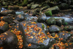 Stream Rocks With Autumn Leaves Stock Image