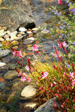 Stream Rocks Flowers Background Royalty Free Stock Photo