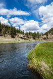 Stream running through Eleven Mile Canyon Colorado. Quiet stream / river running through mountain area. Beautiful spring and summer nature landscapes taken at stock photography