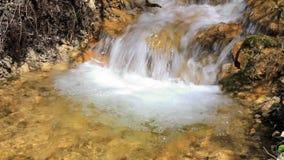 Stream running through forest stock footage