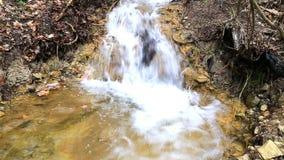 Stream running through forest stock video