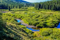 Stream running through a green meadow. Stream running through a lush green meadow, Waiprous County, Alberta, Canada Royalty Free Stock Photo
