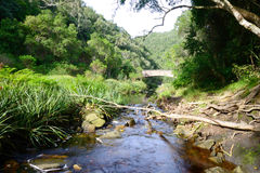 Stream running through indigenous forest with bridge in background  - South Africa Royalty Free Stock Photography