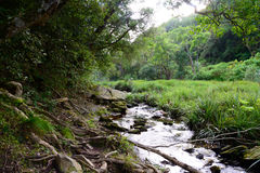 Stream running through indigenous forest  - South Africa Royalty Free Stock Photography