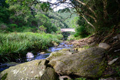 Stream running through indigenous forest  - South Africa Stock Photo