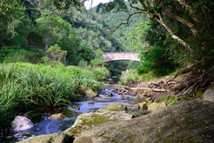 Stream running through indigenous forest  - South Africa Royalty Free Stock Photo