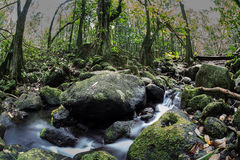 Stream Running Through Tropical Rainforest Stock Image