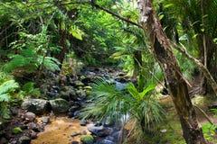 Stream runs through rain forest. Fresh, little stream rushes through the forest toward Piha Beach. Auckland, New Zealand stock image