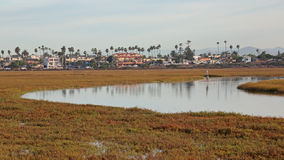 Stream runs though Tijuana Slough NWR. With Imperial Beach in the background royalty free stock photography