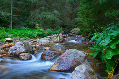 Stream rushing in the forest royalty free stock images