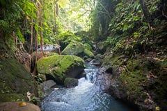 Stream at sacred monkey forest Stock Photo