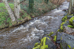 Stream At Saltwater 3. A view of a rushing stream at Dash Point State Park in Washington State Royalty Free Stock Image