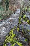 Stream At Saltwater 2. A view of a rushing stream at Dash Point State Park in Washington State royalty free stock photo