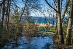 Stream At Seahurst Beach. A stream flow toward the Puget Sound at Seahurst Beach Park in Burien, Washington stock photography
