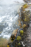The Stream and Shore. This was a boiling stream that led from a hot spring at Yellowstone National Park. The water was very hot and the air was cool that day and Royalty Free Stock Image