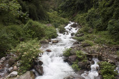 Stream in Sikkim jungle Royalty Free Stock Images