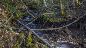 Stream. Small stream in the Karelia Royalty Free Stock Images