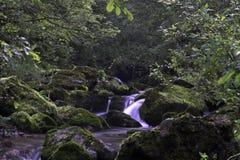 The stream Stock Photos