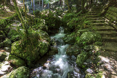 A stream with a small waterfall surrounded with lush green veget Stock Photos