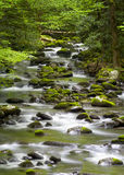 Stream in the Smokies Stock Photos