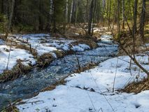 The stream of snow melt in the forest. Stream of snow melt in the forest royalty free stock image