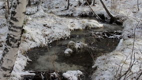 Stream in a snowy winter forest stock video