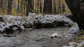 Stream in a snowy winter forest. Creek flows among the trees and dry grass covered with snow. Close-up stock video footage