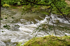 A stream of speedy water wth green trees surrounding it Stock Images