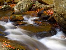 Stream in state park. Stream in new jersey state park Stock Image