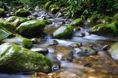 Stream with stone. In the forest Stock Photos
