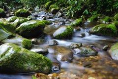 Stream with stone Stock Photos