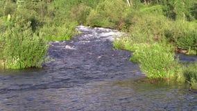 Stream in Summer. A fast flowing mountain stream near aspen colorado in summer stock footage