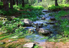 Stream in summer forest Royalty Free Stock Images