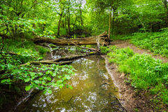 Stream in a summer forest Royalty Free Stock Photos