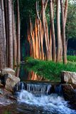 Stream in sunset stock image