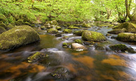 Stream surrounded by green forest, glencree valley, Ireland Royalty Free Stock Photography