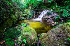 Stream temperate rain forest Stock Photography