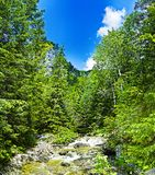 Stream throught valley. Rapid stream on the bottom of the valley surrounded with deep forest royalty free stock image