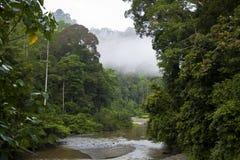 Stream thru Rain and Cloud Forest, Borneo Stock Photo